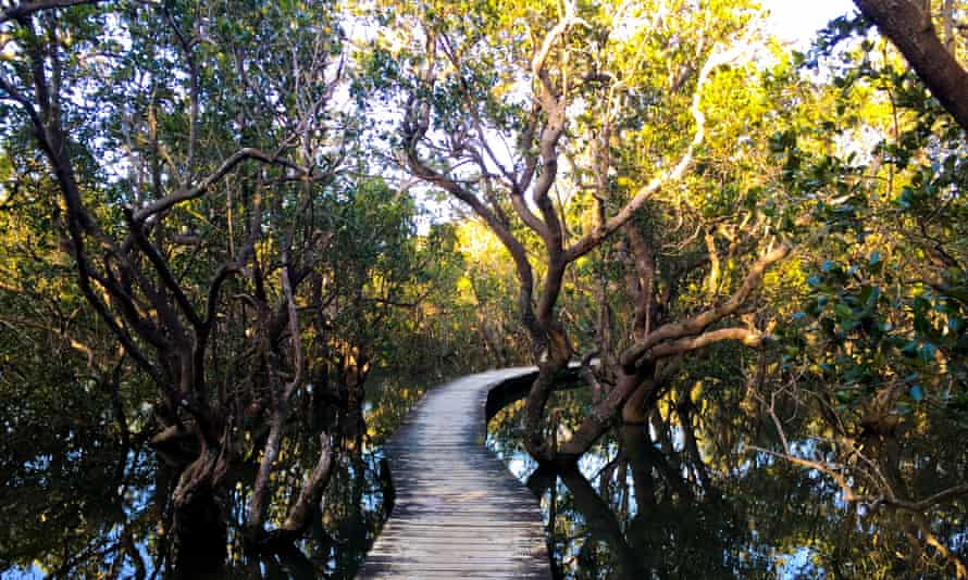 Ecotourism walkway in Daintree national park