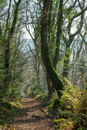 David Green's 'Ancient Path, Halsdon Woods, Devon