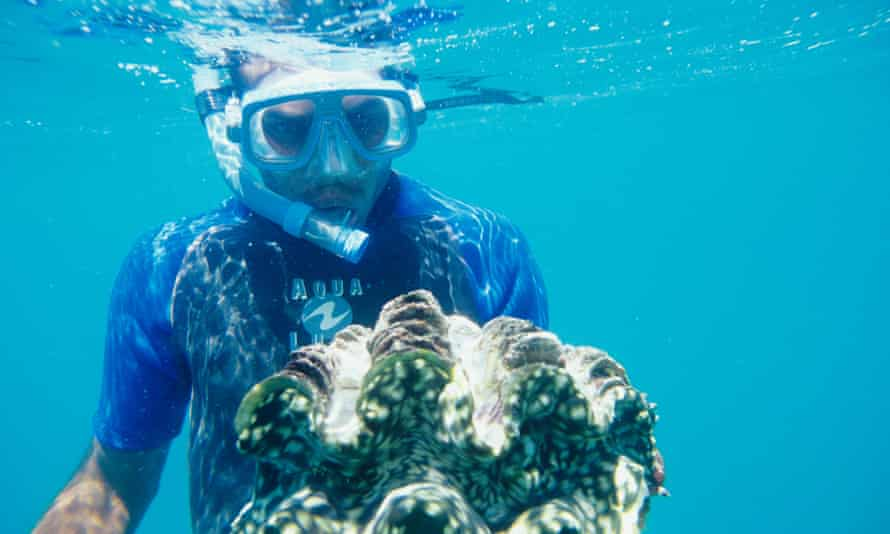 In the 1980s giant clams were thought to be extinct around Fiji but captive breeding and careful reef management have helped to establish new colonies.