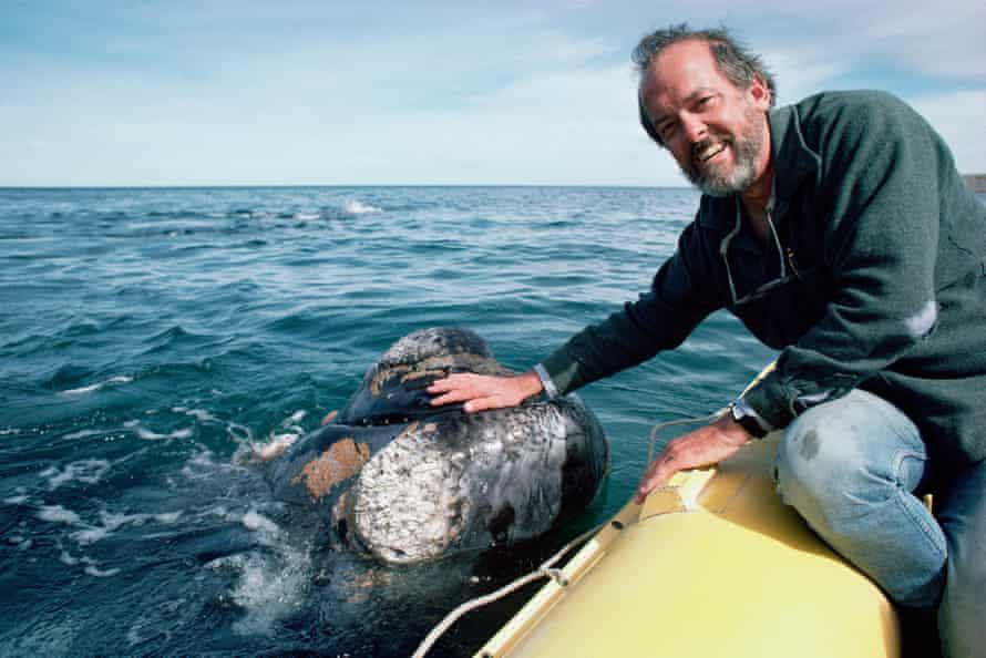 Roger Payne pets whale, Peninsula Valdez, Argentina