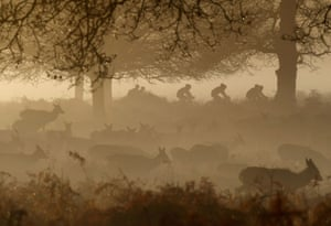 Deer graze as cyclists ride past in the early morning mist at Richmond Park.