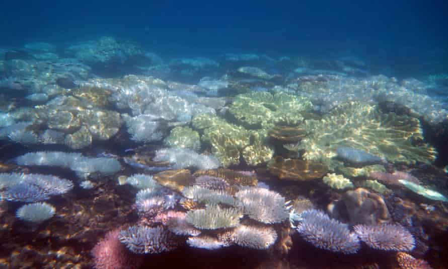 Shallow bleached coral reef on the Great Barrier Reef off the Queensland coast in March 2017
