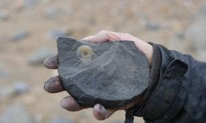 ammonite in blue lias rock