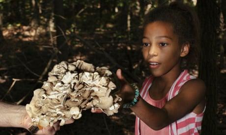 The gospel of mushrooms: how foraging became hip