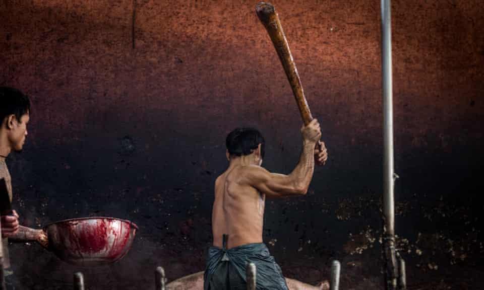 Inside a Thai slaughterhouse