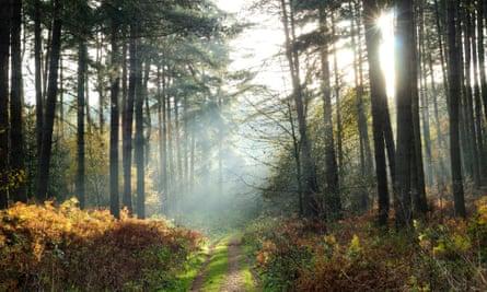 Sherwood Pines, Notts.