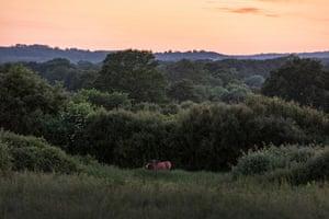 Wild ponies at dusk.