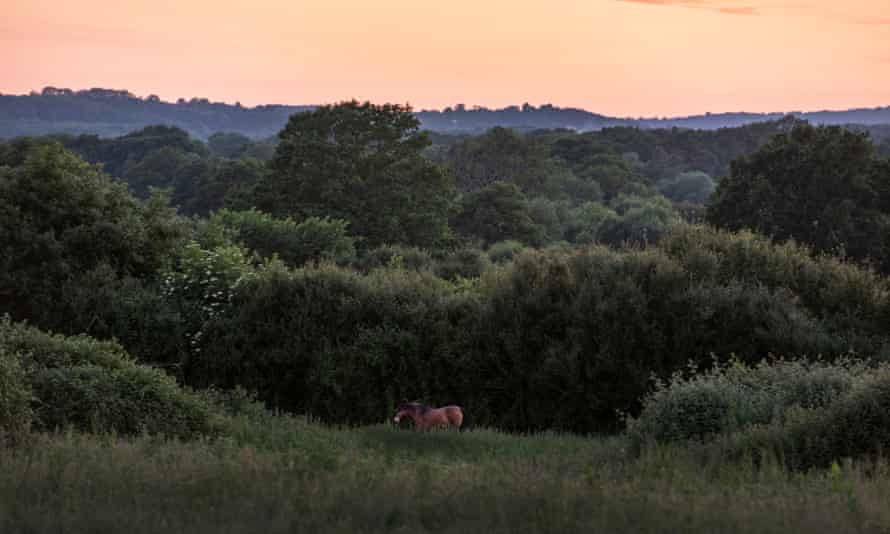 The Knepp estate at dusk: the former arable farm is now a landmark for conservation.