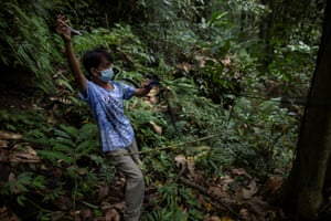Edison Cosico sets up a mist net near a bat roost at Mount Makiling