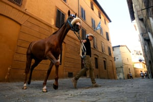 A man walks a horse before a test run of a traditional horse race in Siena, Italy