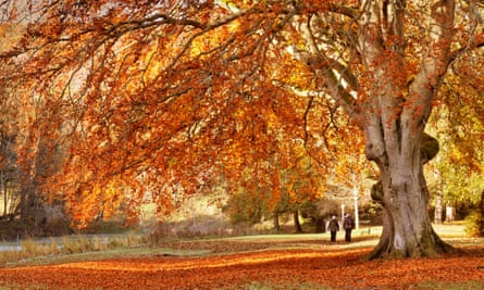 Golden Autumn colours at Peebles