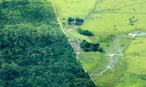 An area in Brazil's Amazon state of Para freshly cleared for cattle, 2009.