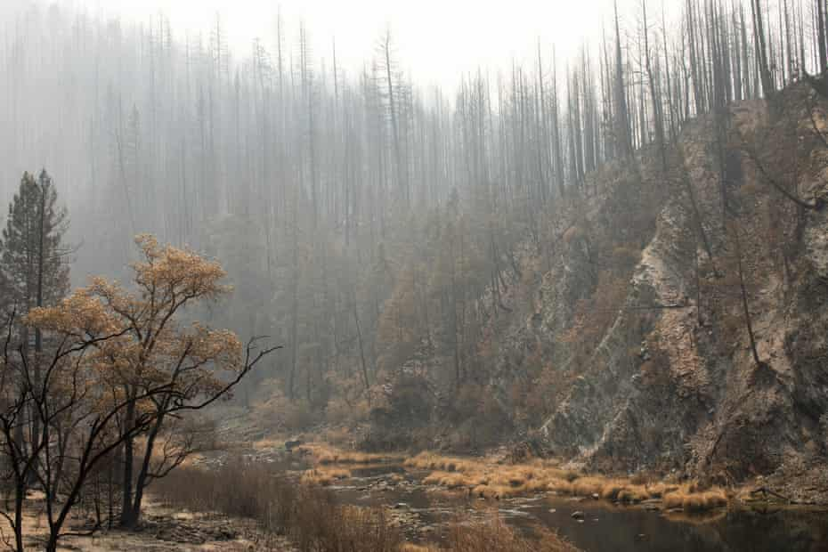 A scene in the Plumas national forest