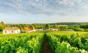 Champagne vineyards at Montagne de Reims in France.