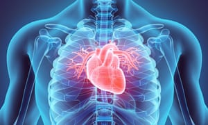3D illustration of Heart
