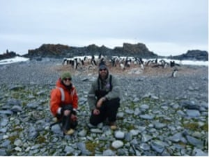 Antarctic Adélie penguin chicks wiped out because of too much sea ice 278