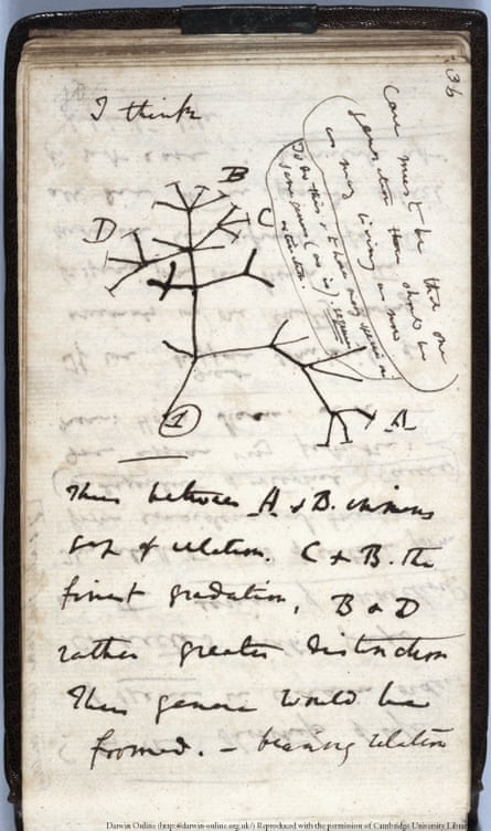 Charles Darwin's seminal 1837 Tree of Life sketch from a notebook that has, along with another Charles Darwin manuscript, been reported as stolen from Cambridge University Library.
