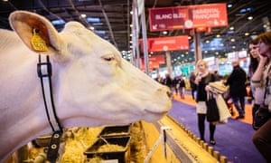 Patting cows in Paris is usually seen as an essential date for candidates.