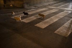 Barcelona, Spain. Dogs cross an empty street
