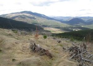 Logged areas in the Apuseni mountains, Romania.