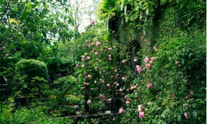 'My three great garden loves are topiary, ferns and climbing roses': Nigel Slater.