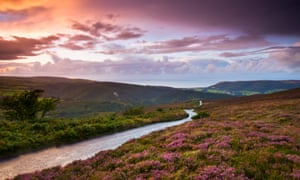 Country lane winds downhill through flowering heather clad moorland, Exmoor national park, Somerset, England, United Kingdom, Europe