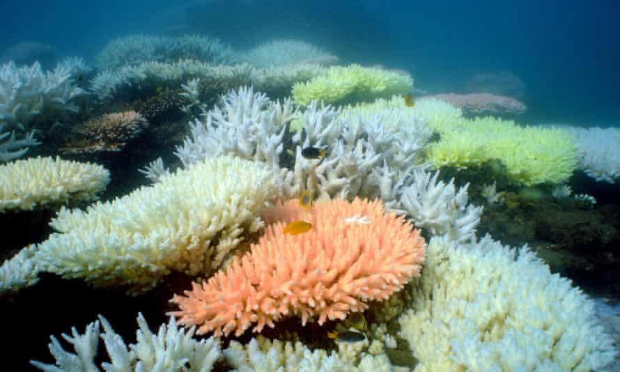 Corals at North Keppel Island on the Great Barrier Reef in Queensland, Australia.
