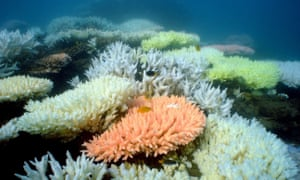 Studies have shown 'high levels of extinction risk in local marine populations' thanks to human impact and climate change.