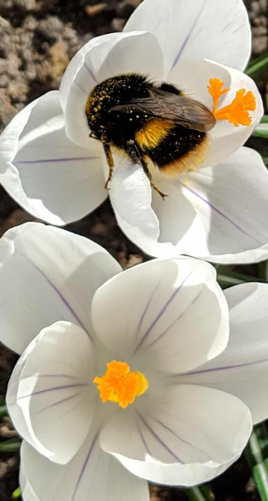 Many readers said they'd seen bumblebees in the garden.