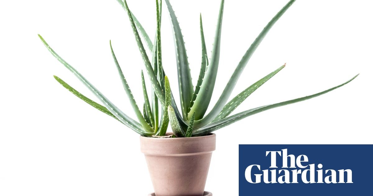 I have tried everything, but my houseplant just isn't happy