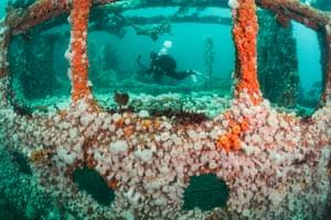 encrusted wreck under water