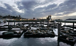Sea lions sleep on docks at Pier 39 in the San Francisco harbor. The area attracts crowds of tourists and seagulls.