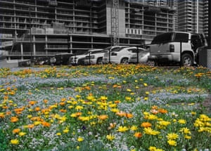 Flowers grow in an empty lot by a multi-storey car park in San Diego, US