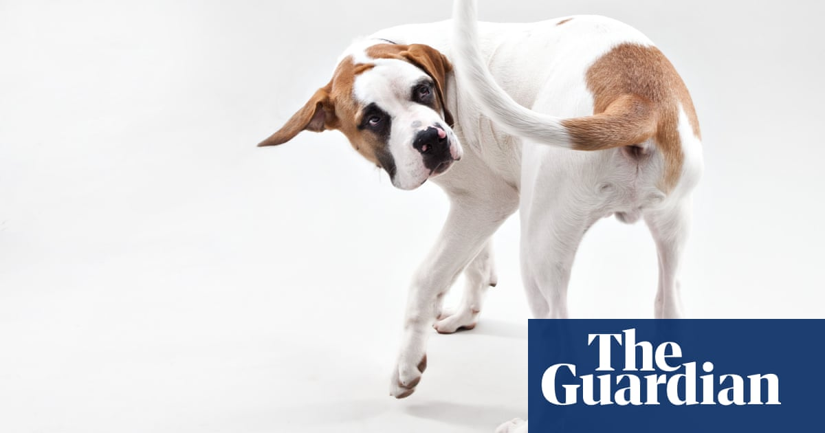 Dog breeders urged to act over high levels of anxiety in pets