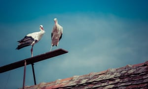 <strong>Slavonski Brod, Croatia</strong><br>TRue love: storks Rodan-Klepetan and Malena prove that distance only makes the heart grow fonder. Every year, male stork Rodan-Klepetan flies over 13,000km to be with Malena. He returns every year to Slavonski Brod as Malena is unable to fly since being shot in 1993. Every year Rodan migrates to South Africa for the winter but when the warmer weather gets warmer he returns to the same rooftop in Croatia where Malena makes her nest.