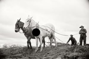 Getting fields ready for spring planting. North Carolina. 1936