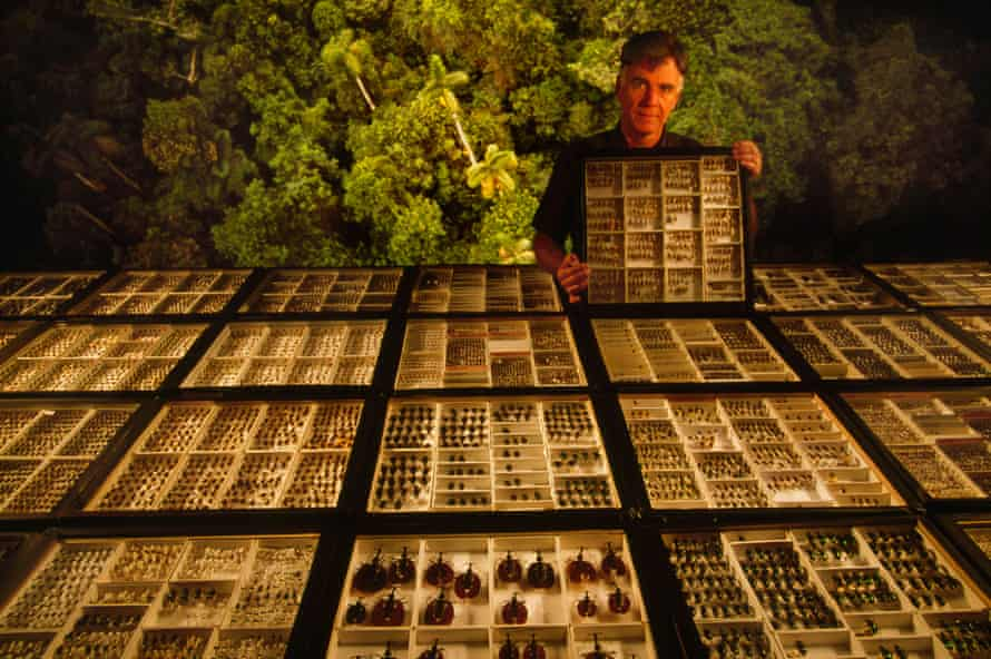 Terry Erwin's beetle collection from rainforest canopies in the Amazon, on display in Washington, DC.