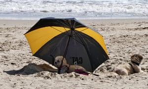 Bournemouth beach: Dogs under an umbrella