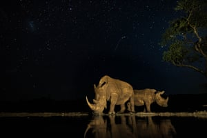 Rhinos at a waterhole