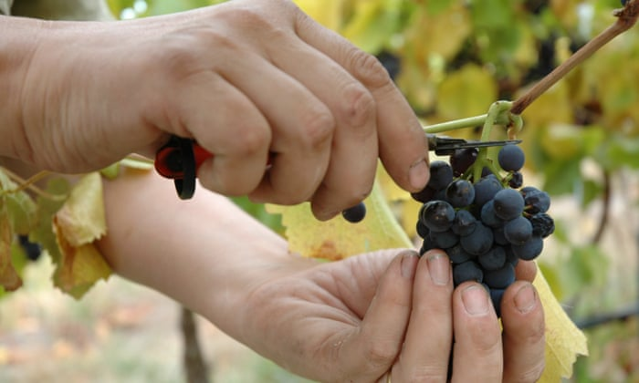 Three Fine Pinot Noirs From Chile And Argentina David Williams
