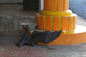 A heat exhausted bat crawls towards the shade after falling from trees during a heatwave in Bhopal, India. Thousands of bats were seen dropping on roads because of the 45C heat.