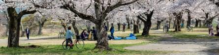 Cherry blossom during spring in Arashiyama.