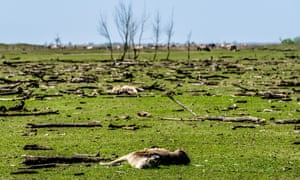 Oostvaardersplassen in April: animal rights activists have heavily criticised the rewilding principles used at the reserve.