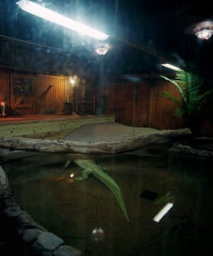 Albino Aligator, Palm Beach Zoo, West Palm Beach. 2015 As I wandered around the zoo at night, no other souls were on site but the animals - most of whom were sleeping.