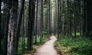 The path through the forest to the Grassi Lakes.