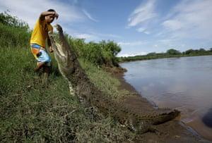Puntarenas, Costa Rica Juan Cerdas feeds a large crocodile by the Tárcoles