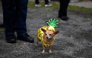 Another dog in a different costume
