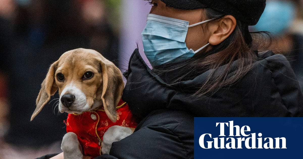 Lockdown boom in UK pet ownership fuels cat and dog food shortage
