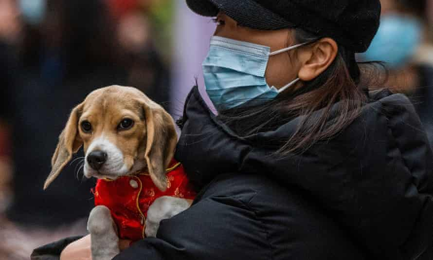 A woman with her puppy in London's Chinatown in February