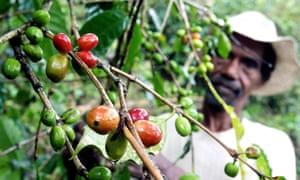 A coffee farmer